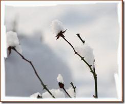 Schnee2013_2